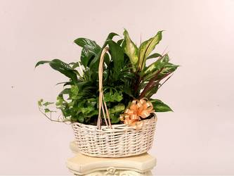 Plant Basket or Plant Container from Kinsch Village Florist, flower shop in Palatine, IL
