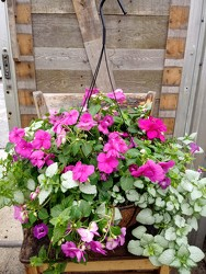 COCO MOSS HANGING BASKET / SHADE from Kinsch Village Florist, flower shop in Palatine, IL