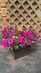 GC Happiness Planter Sun from Kinsch Village Florist, flower shop in Palatine, IL