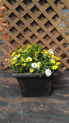 GC Honey Bee Planter Sun from Kinsch Village Florist, flower shop in Palatine, IL