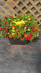 GC Sunset Planter Sun from Kinsch Village Florist, flower shop in Palatine, IL