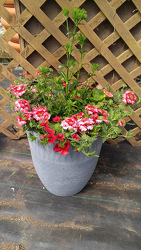 GC Red Dawn Sun Planter  from Kinsch Village Florist, flower shop in Palatine, IL