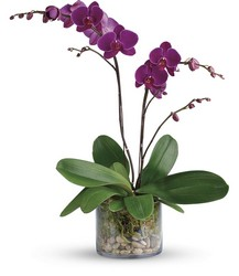 Glorious Gratitude Orchid
